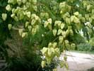 Растения Евпатории -